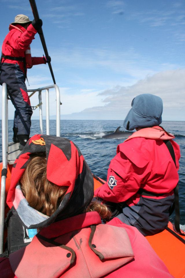 Tagging attempt of a minke whale, Aug 2011
